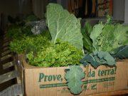 Prove – promove a agricultura amiga do ambiente