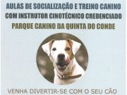 Cães: Treinos de socialização no Parque Canino